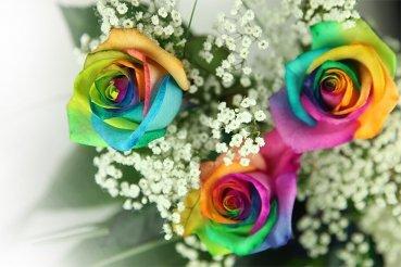 garten top kaufen 3 bunte rosen dekoriert und inklusive gratis kultvase. Black Bedroom Furniture Sets. Home Design Ideas
