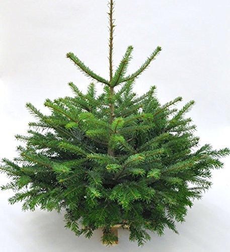 garten top kaufen echter weihnachtsbaum nordmanntanne h. Black Bedroom Furniture Sets. Home Design Ideas